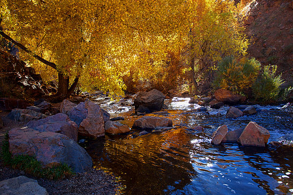 Under A Gold Canopy Print by Jim Garrison