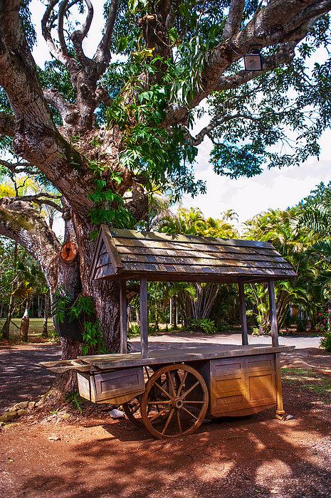 Under The Shadow Of The Tree. Eureka. Mauritius Print by Jenny Rainbow