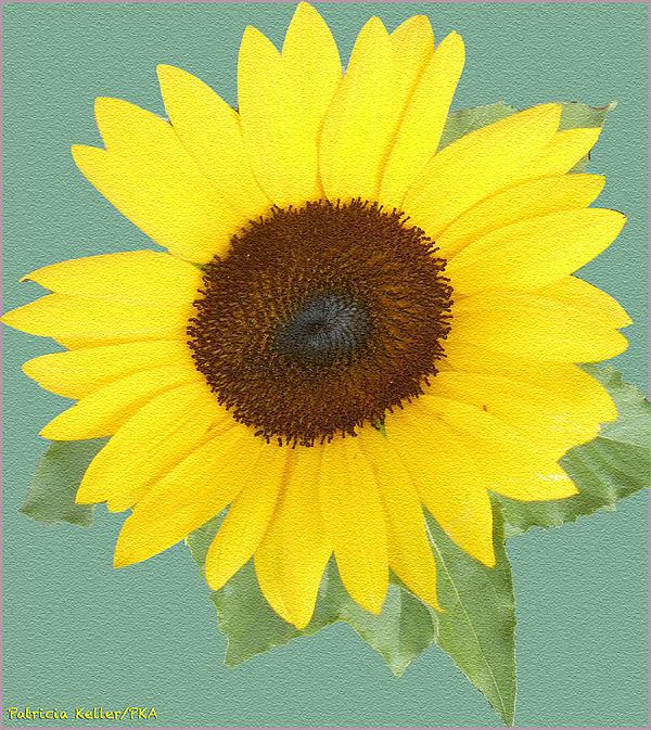 Under The Sunflower's Spell Print by Patricia Keller