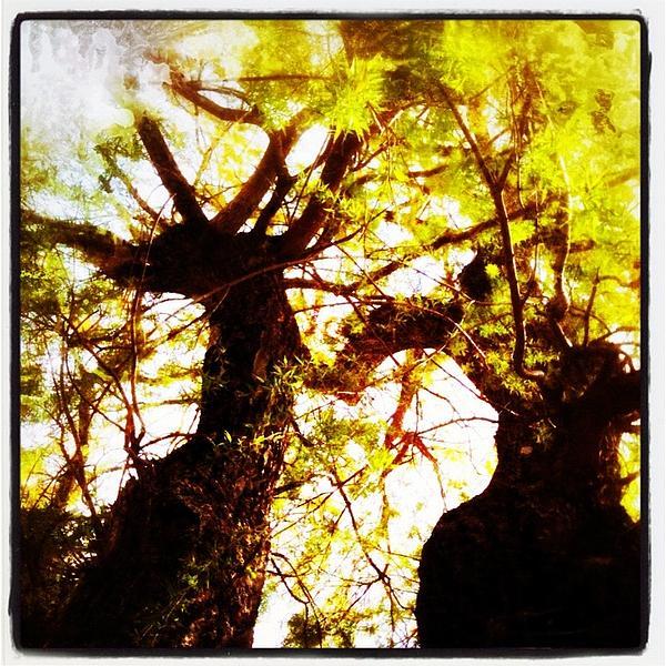 Untitled-twin Trees Print by Juliann Sweet