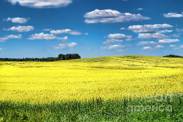 Alexandra Jordankova - Van Gogh Would Have a Field Day