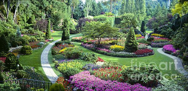 Vancouver Butchart Sunken Gardens Beautiful Flowers No People Panorama Print by David  Zanzinger