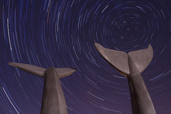 Vermont Night Landscape Star Trails Whale Tails Print by Andy Gimino