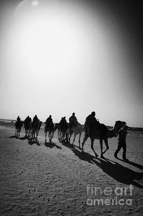 vertical hot sun beating down on sands and camel train in the sahara desert at Douz Tunisia Print by Joe Fox