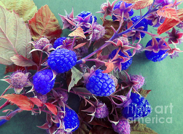 Very Blue Berries Print by Tina M Wenger