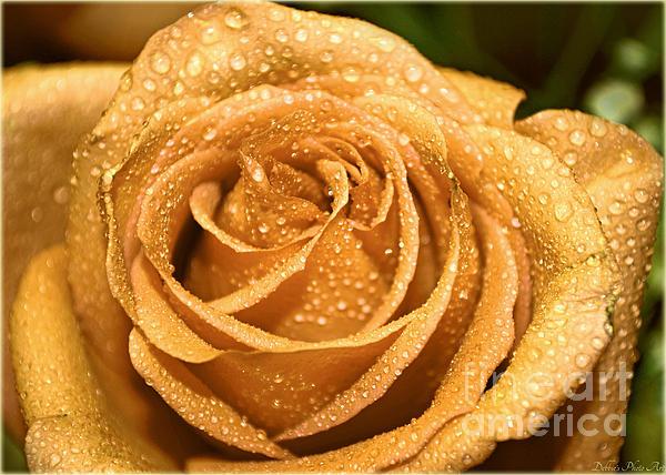 Very Wet Rose Print by Debbie Portwood