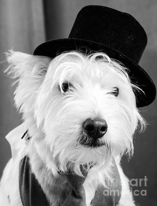 Veteran Vaudeville Stage Actor Print by Edward Fielding