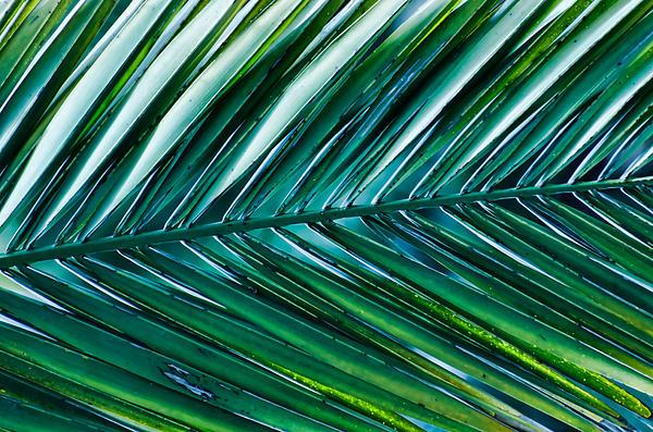 Vibrant Palm Print by Don Schwartz
