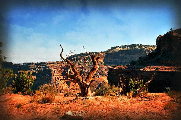 View Of The Canyon Print by Marty Koch