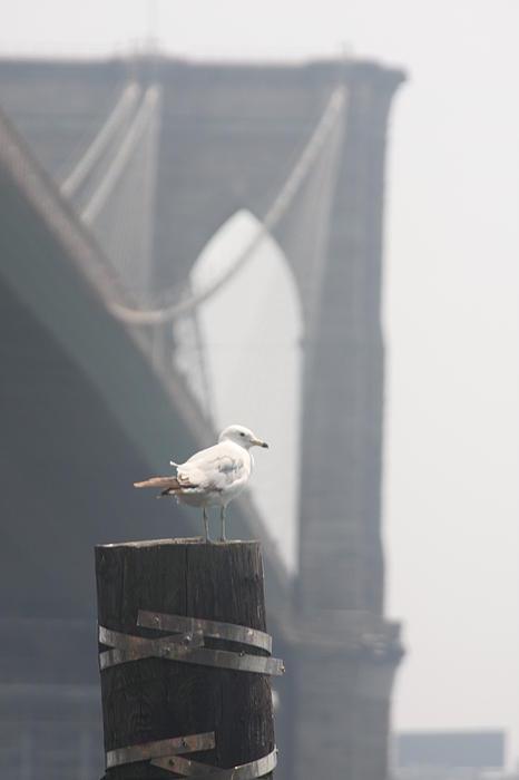View On Brooklyn Bridge Print by Vadim Levin