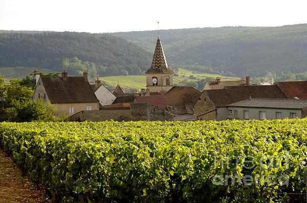 Village Of Monthelie. Burgundy. France Print by Bernard Jaubert