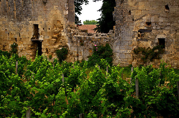 Vineyard In The Ruins Print by Christine Burdine