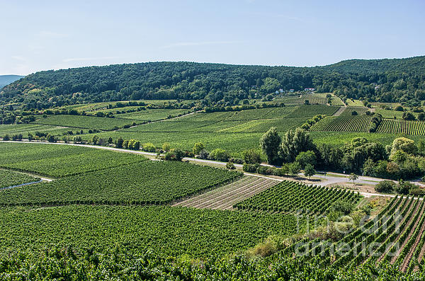 Vineyards In Rhineland Palatinate Print by Palatia Photo