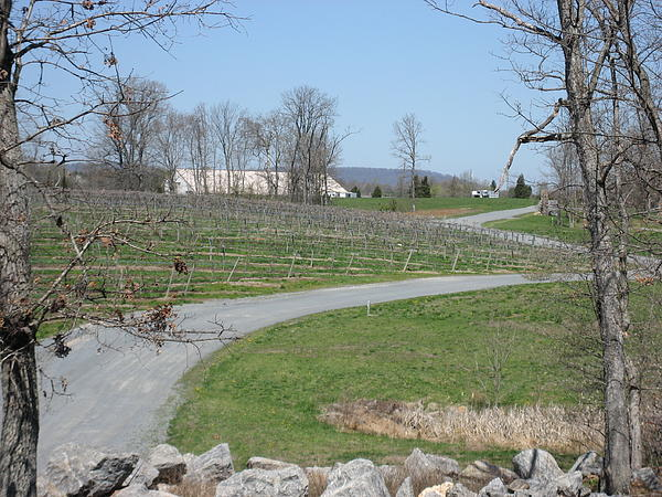Vineyards In Va - 12122 Print by DC Photographer