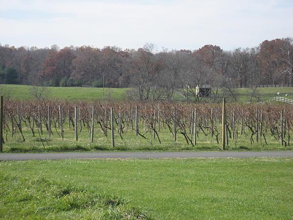Vineyards In Va - 121234 Print by DC Photographer