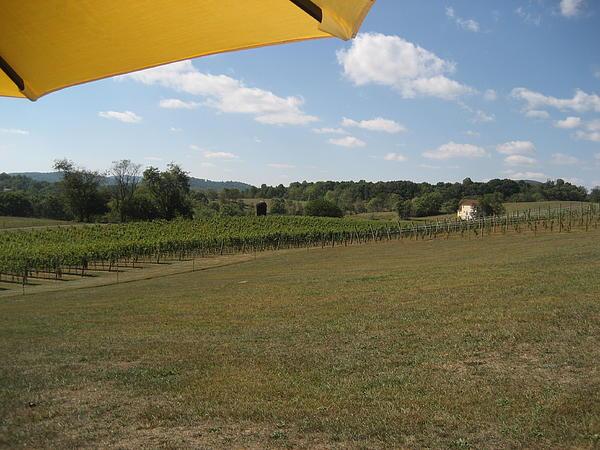 Vineyards In Va - 121249 Print by DC Photographer