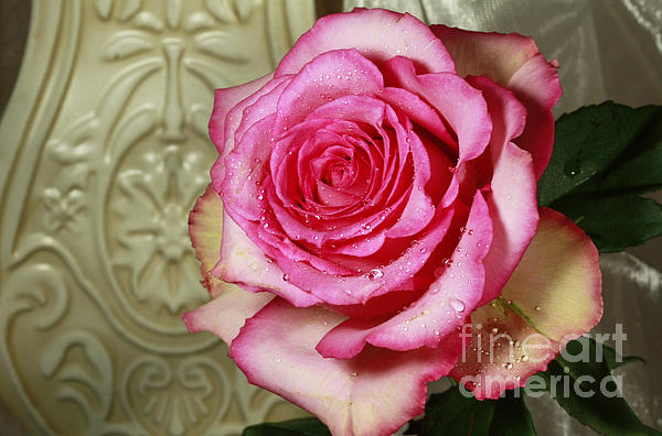 Vintage Beauty Rose Print by Inspired Nature Photography By Shelley Myke