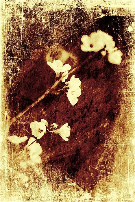 Vintage Flower Print by Jaroslaw Grudzinski