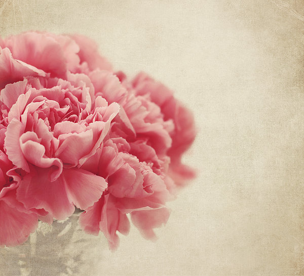 Kim Hojnacki - Vintage Pink Carnations