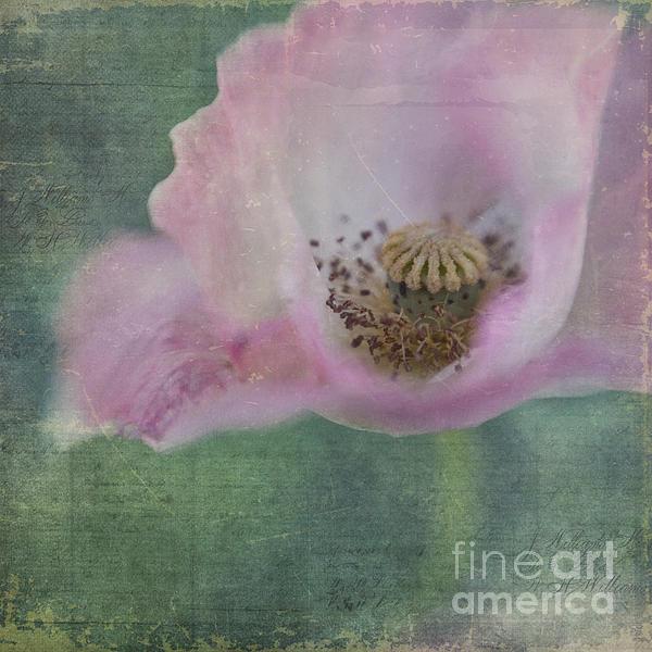Vintage Poppy Print by Priska Wettstein