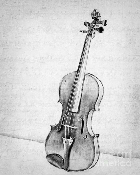 Violin In Black And White By Emily Kay