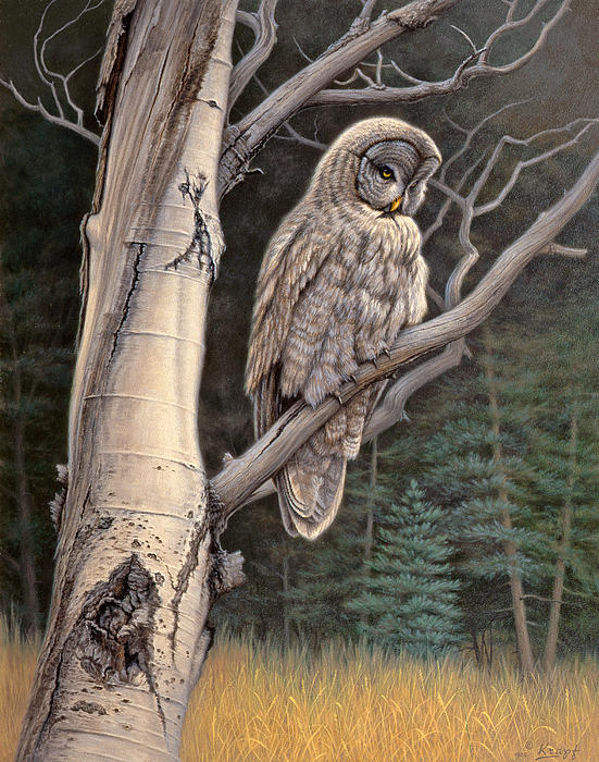 Visitor From The North-great Grey Owl Print by Paul Krapf