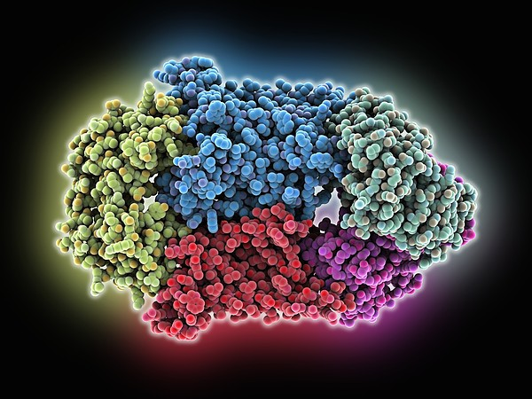 Vitamin B12 Import Proteins Print by Science Photo Library