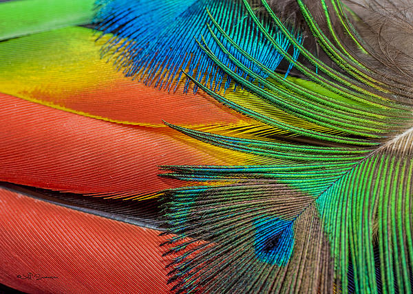 Vivid Colored Feathers Print by Jeff Swanson
