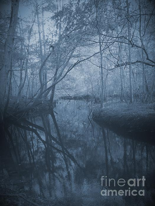 Waccasassa River Print by Phil Penne