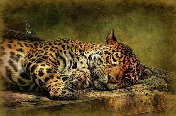 Wake Up Sleepyhead Print by Lois Bryan
