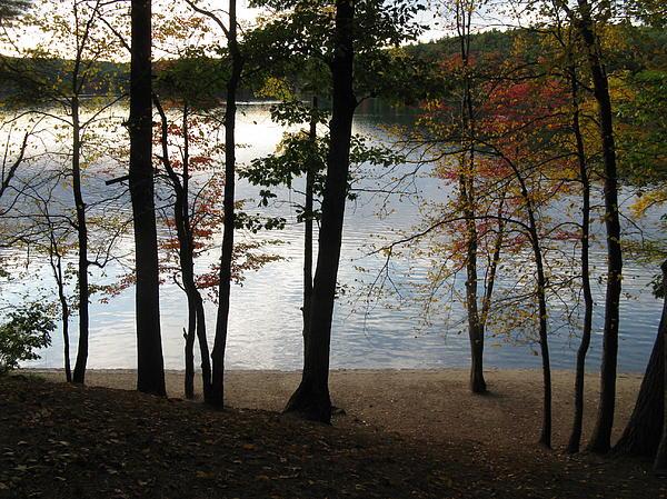Walden Pond In Autumn Print by Sheila Savage