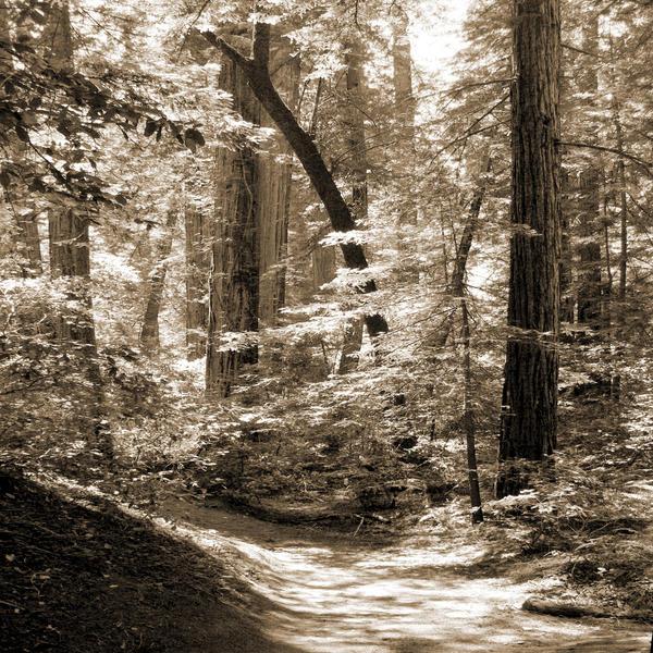 Walking Through The Redwoods Print by Mike McGlothlen