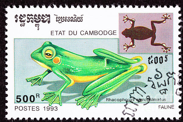Wallace's Flying Frog Print by Jim Pruitt