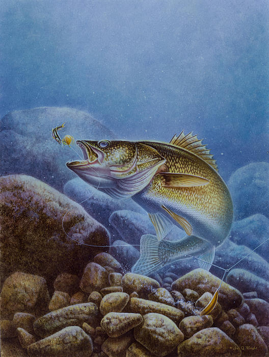 Walleye And Lindy Print by Jon Q Wright