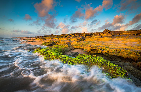 Washington Oaks State Park Coquina Rocks Beach St. Augustine Fl Beaches Print by Dave Allen