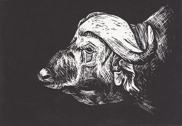 Water Buffalo Print by Alexis Sobecky