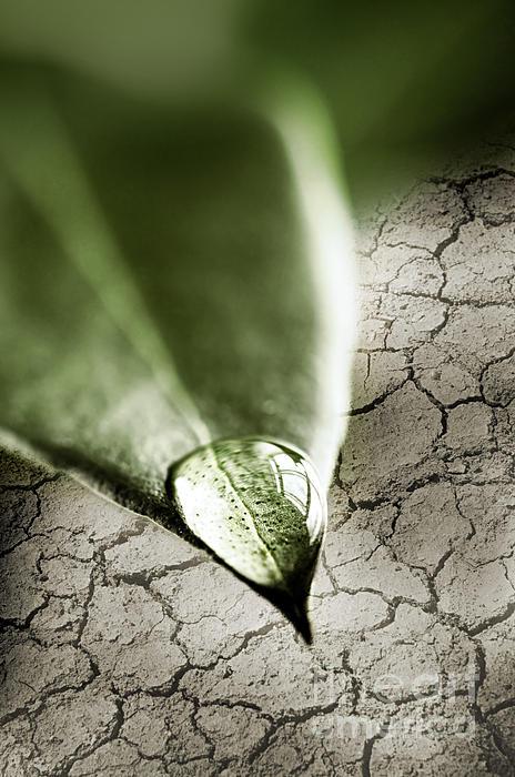 Water Drop On Green Leaf Print by Elena Elisseeva