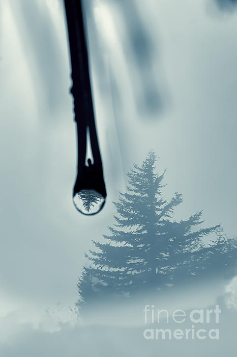 Water Drop With Tree Reflection Print by Dan Friend