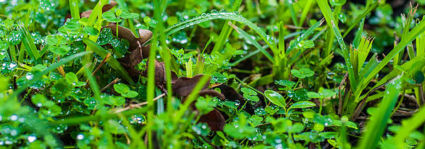 Water Drops On The  Grass 0052 Print by Terrence Downing