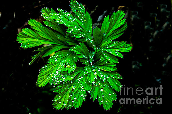 Water Drops Print by Robert Bales