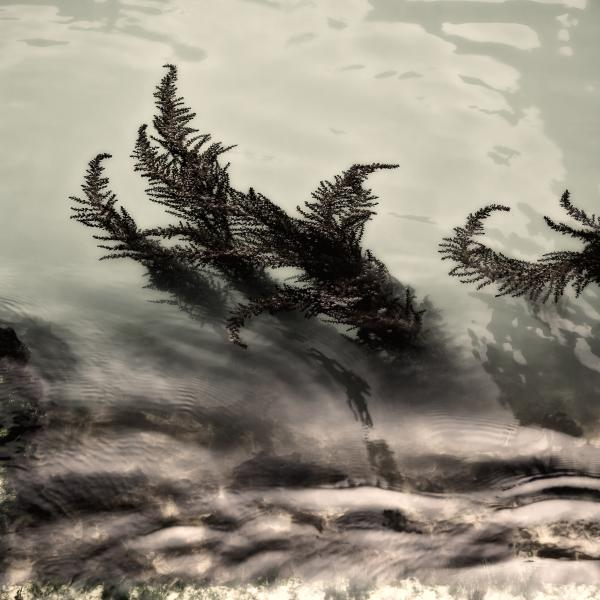 Water Fronds Print by Dave Bowman