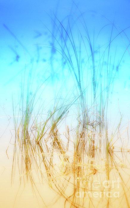 Water Grass - Outer Banks Print by Dan Carmichael