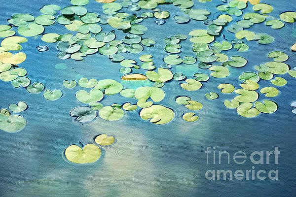 Water Lilies Print by Darren Fisher