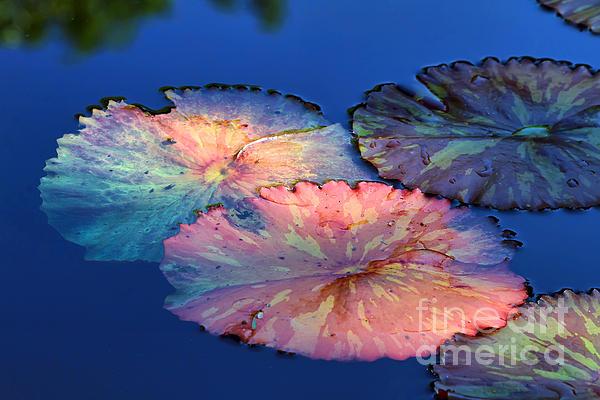 Teresa Zieba - Water Lily Leaves
