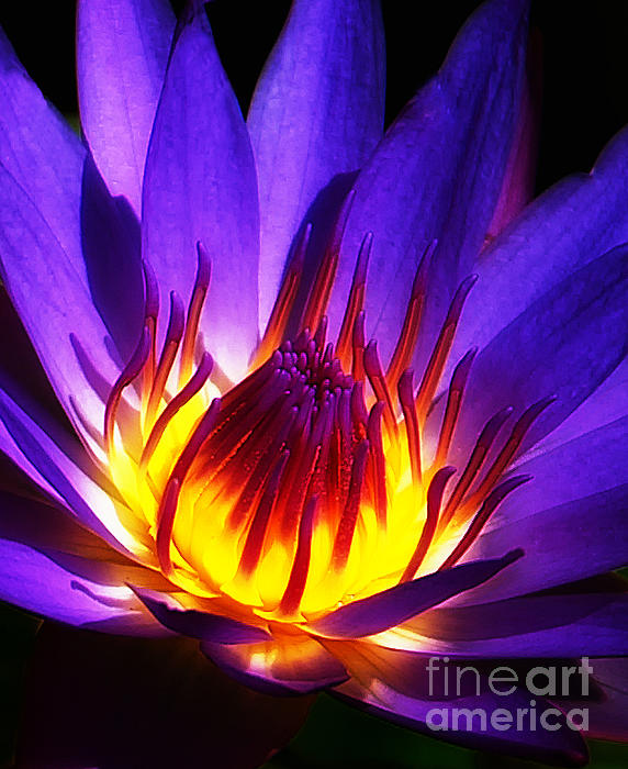 Water Lily Print by Mike Nellums