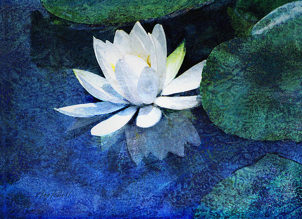 Water Lily Two Print by Ann Powell