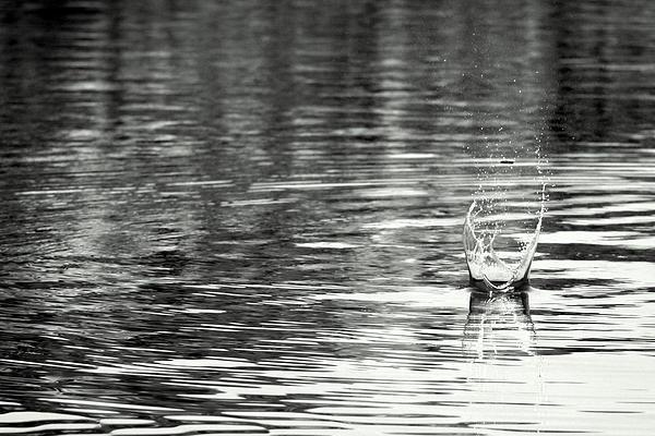 Water Print by Prajakta P