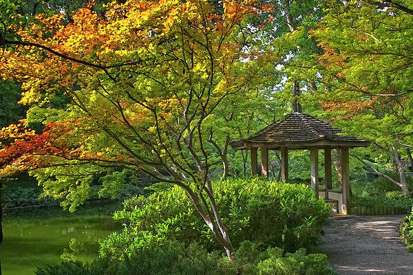 Joan Carroll - Watercolor Gardens