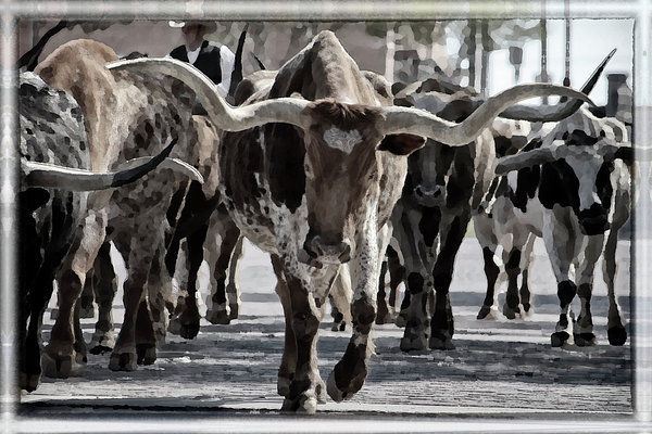 Watercolor Longhorns Print by Joan Carroll