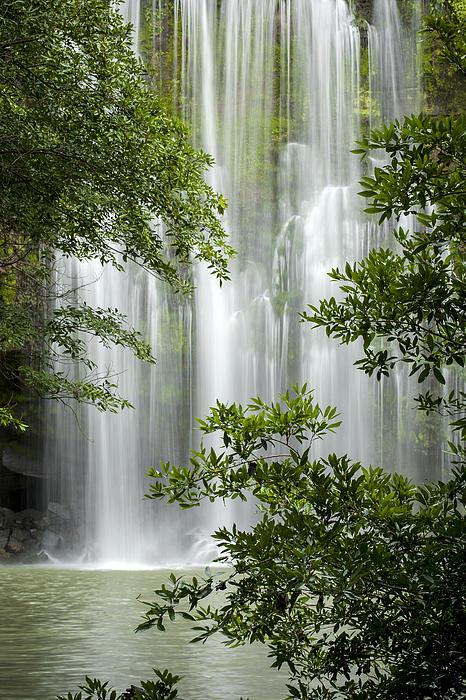 Waterfall Through Trees Print by Juan Carlos Vindas